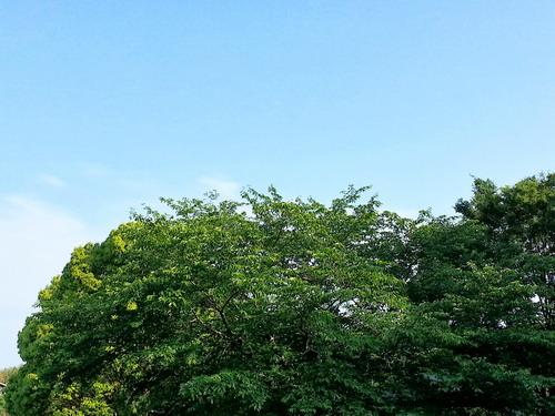 Blue Sky 20130521