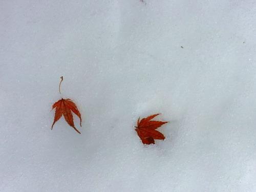 Momiji and Snow