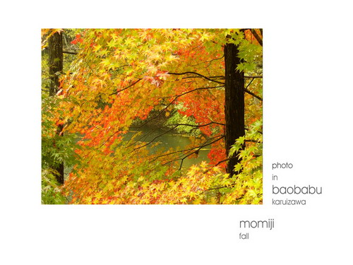 baobabu-17.jpg