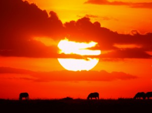 沈まぬ太陽
