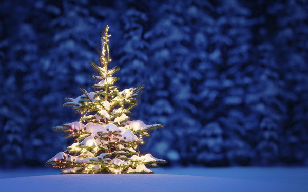 nature-landscapes_christmas-tree