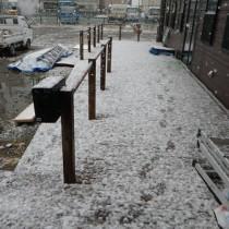 今日は全国的寒かったから、雪でしたか。でも春は来てますよ